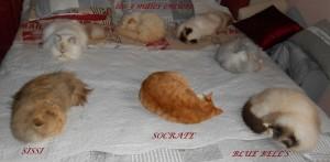 les chats du Clos de Tessara