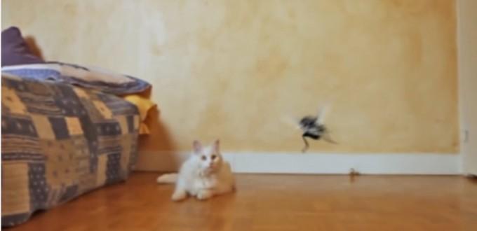 Wolverine cat vs Zobi la mouche