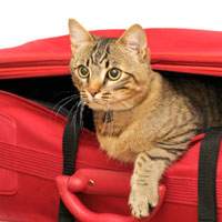 chat_valise200