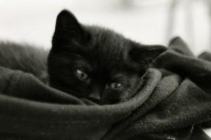 serviette enroulée chat