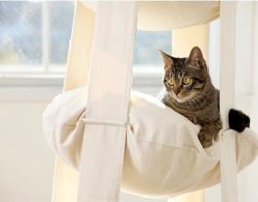 hamac tages pour chat f liboutique lechatpacha. Black Bedroom Furniture Sets. Home Design Ideas