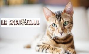 Bar à chats la Chatouille