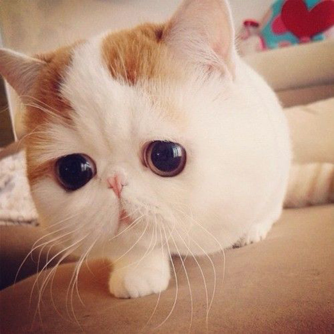 Chats Gros Yeux