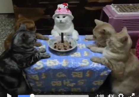 vidéo humour, la vie des chats occidentaux
